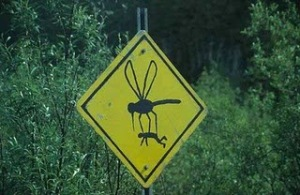 "Mosquitos are the unofficial ""State Bird"""